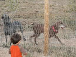 The Simplest Way to Make your Dog Fences