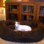 comfortable large dog beds