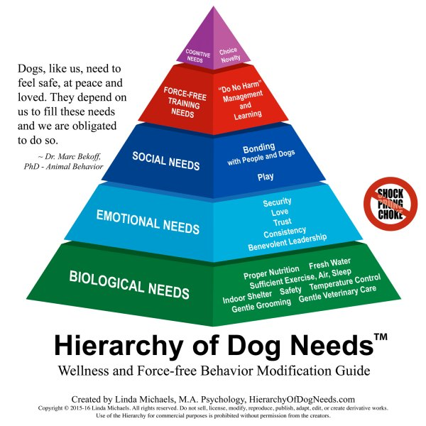 Essay Hierarchy And Separation
