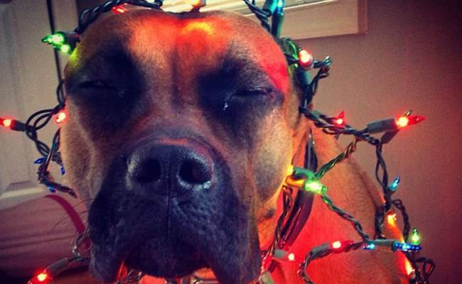10 Reasons You Should Be Thankful For Your Dog Dog Reference