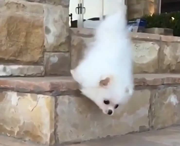 The Most Beautiful Puppy Fail Ever Dog Reference