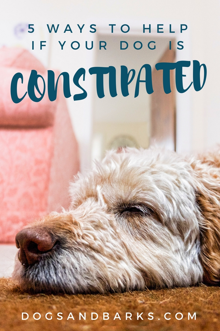 5 Ways to Help if Your Dog is Constipated - Dogs and Bark