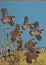 Lynn Bogue Hunt Quail painting