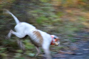 Puck on the run