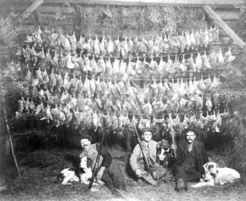 Michigan Grouse Hunting 1917