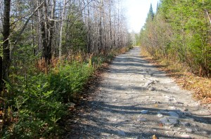 Classic big-woods Maine cover. I walk the road, Puck works the edges.