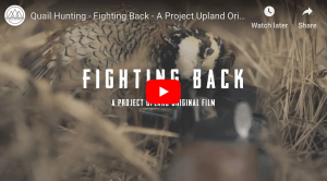 Fighting Back – A Bobwhite Quail Film from Project Upland...