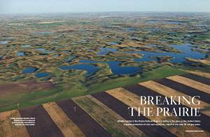 Neatly plowed farmlands in North Dakota encroach on seasonal prairie potholes, vital habitat for waterfowl and other wildlife. Pic from the National Wildlife Federation website.