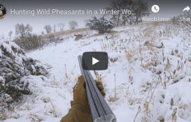 Hunting Wild Pheasants in a Winter Wonderland - South Dakota 2020