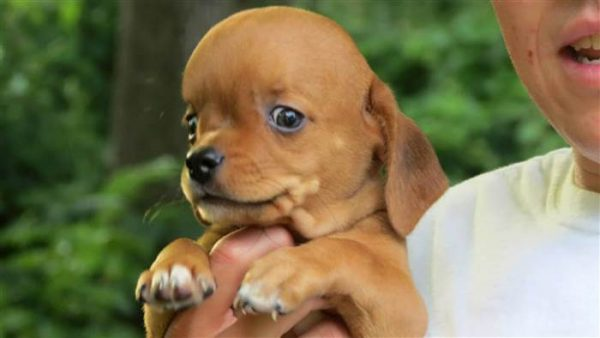 Image result for dog with hydrocephalus