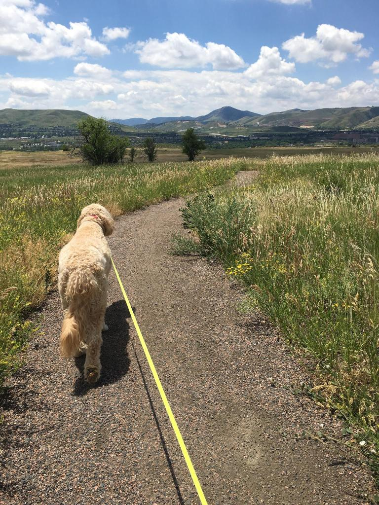 Charlie Enjoying a Trail with Dogs Colorado
