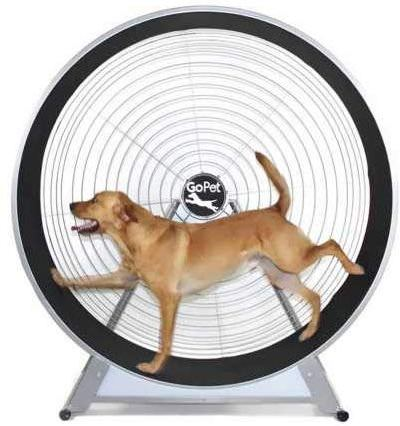 image of dog on treadmill wheel