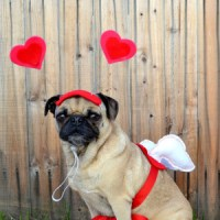 Valentine's Day Outfits for Dogs  Dog Scout Cafe