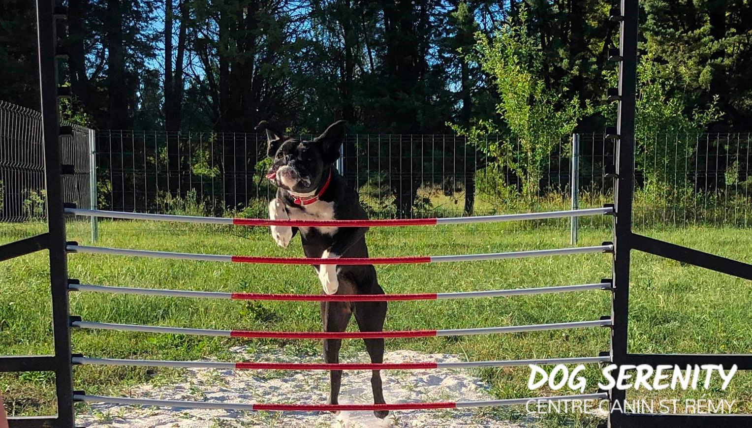Sport Canin - Dog Crossfit - Weight pulling - Saint Rémy de Provence