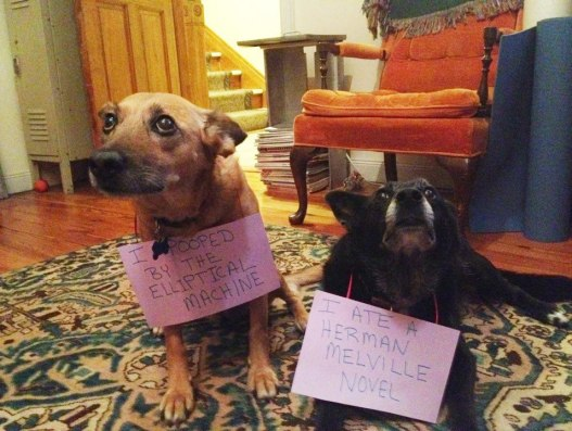 https://i0.wp.com/www.dogshaming.com/wp-content/uploads/2012/08/tumblr_m90e36alQ01re4ne0o1_1280.jpg?resize=527%2C397