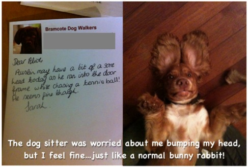I Came Home To This Note From The Dog Sitter