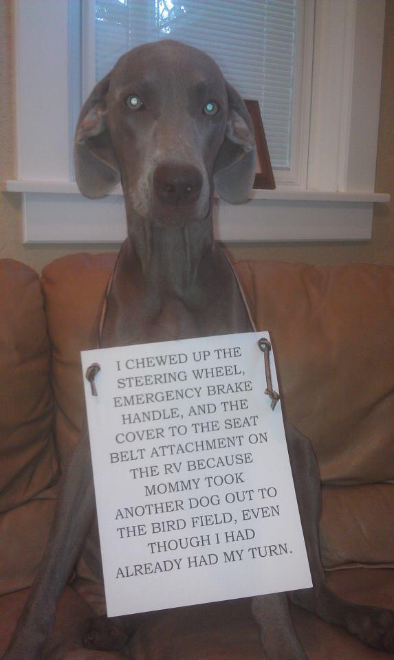Dog-Shaming-Yetta