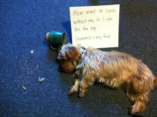Chewie-mug