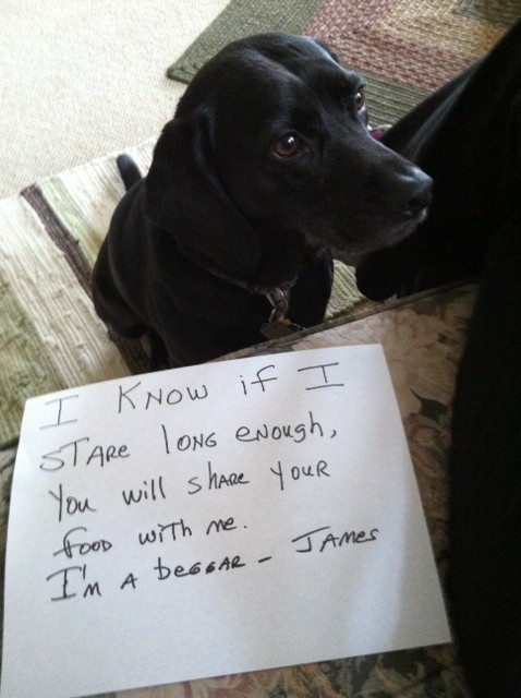 James-The-very-patient-beggar