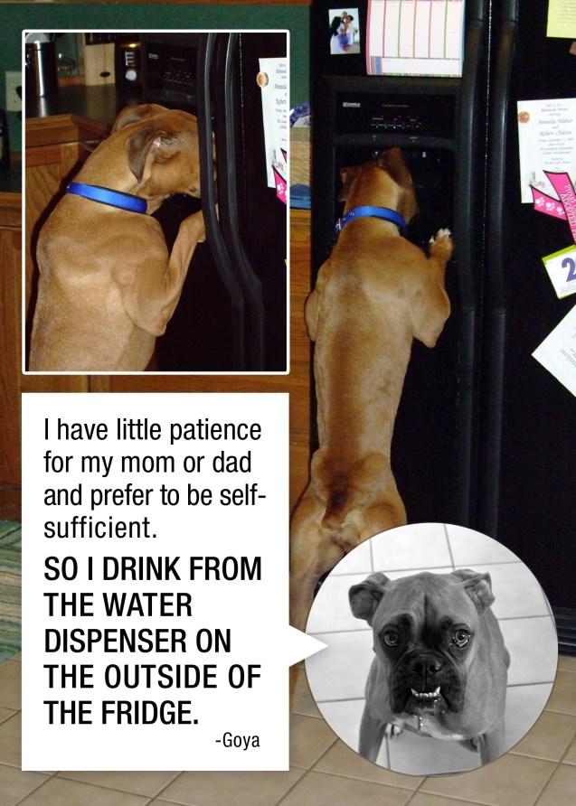 Goya-dog-shaming