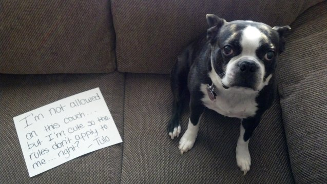 dog-shaming-3