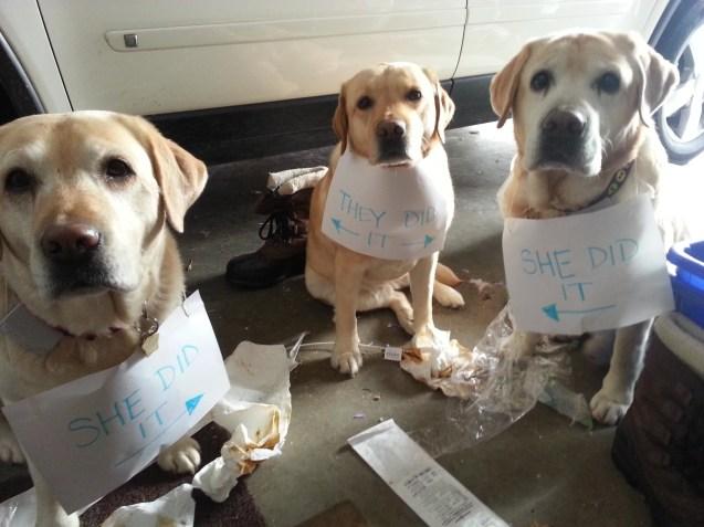 guiltydogs