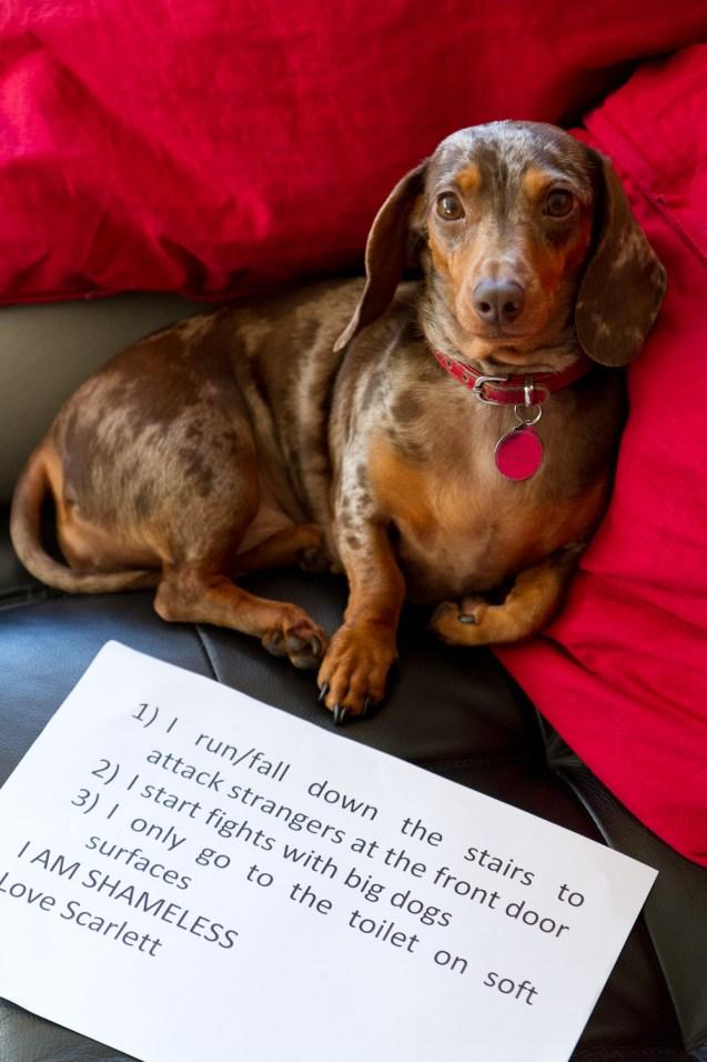 Scarlett-dog-shaming