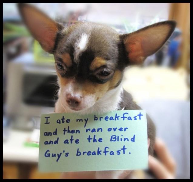 dog-shaming-wf
