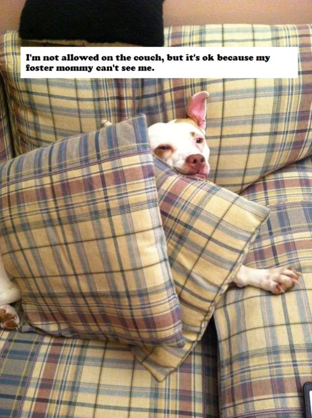 faith_couch_dogshaming