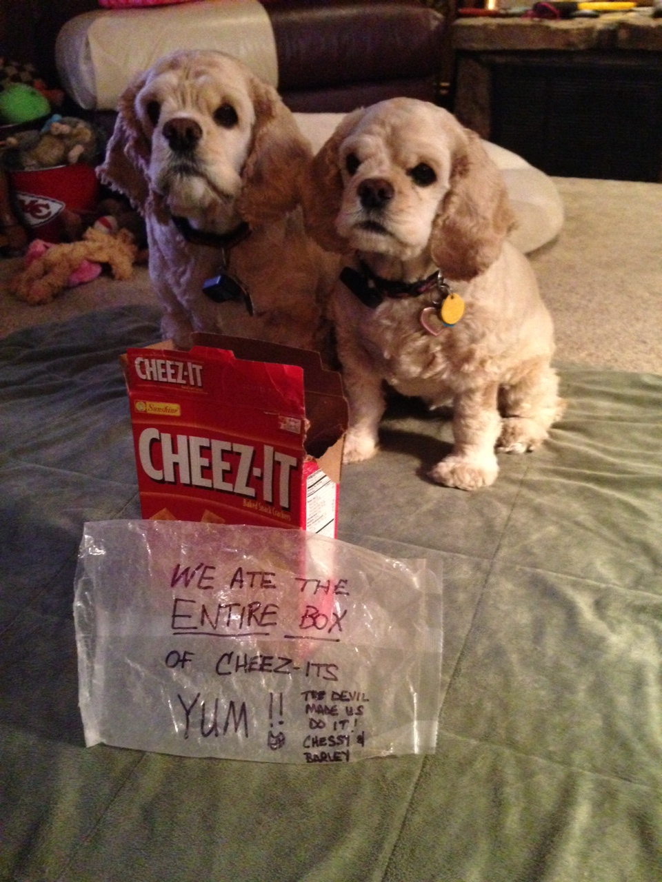 CHEEZ-ITS YUM, dried fruit, by far, most dogs will gladly help themselves to a Cheez-It treat, | Doggie ...