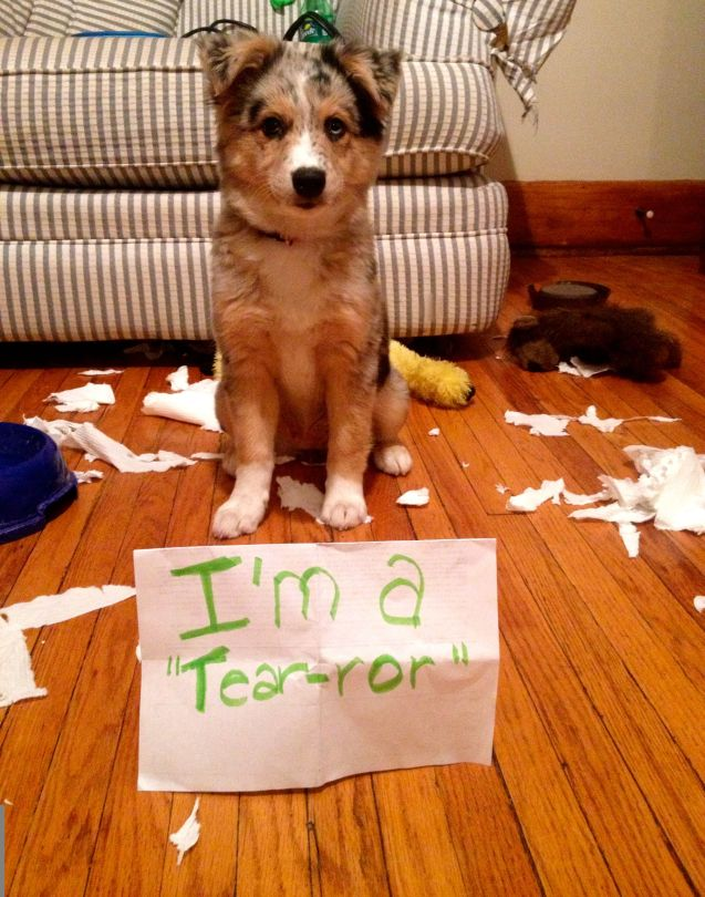 lulu-dogshaming