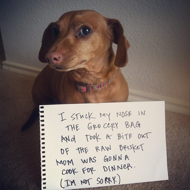 dogshaming_lucy