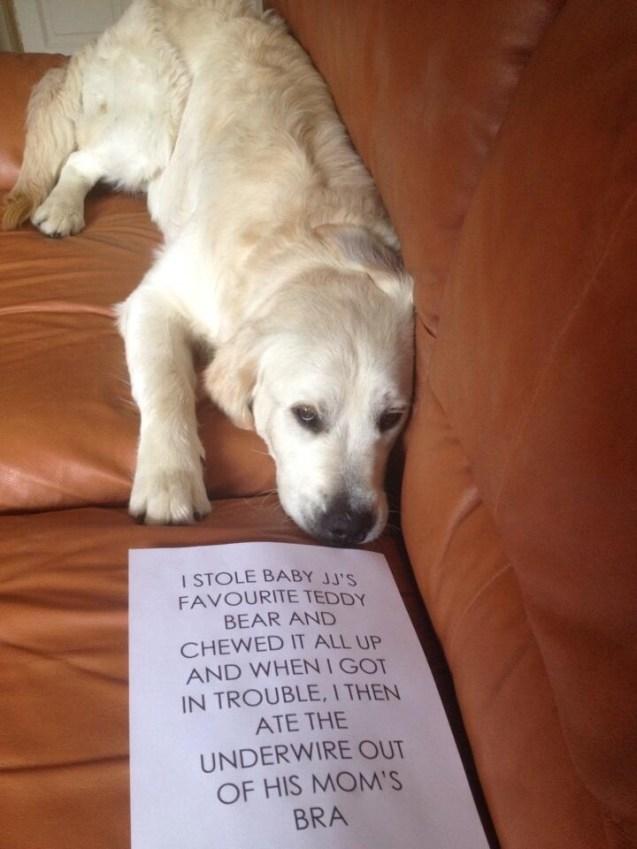 Bobby-Dog-Shaming
