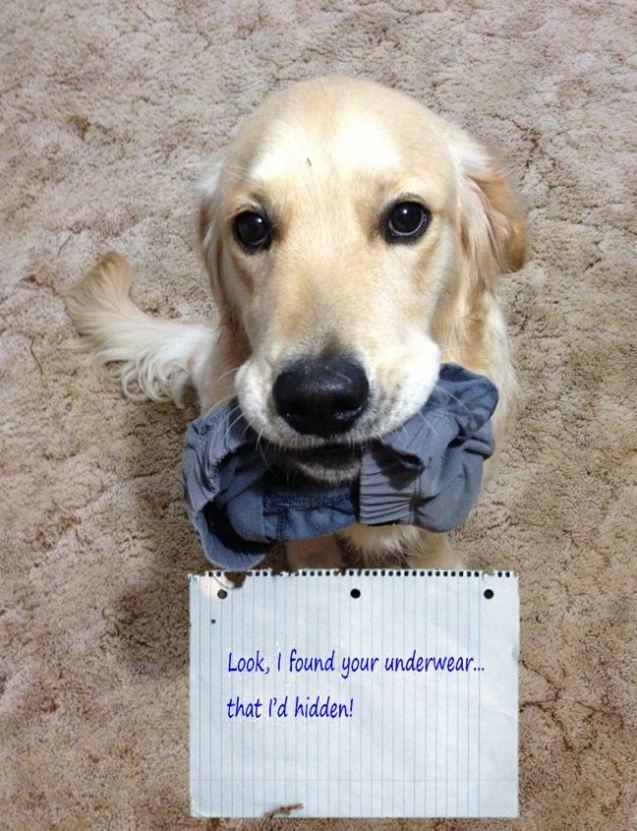 Dog-Shaming-Underwear