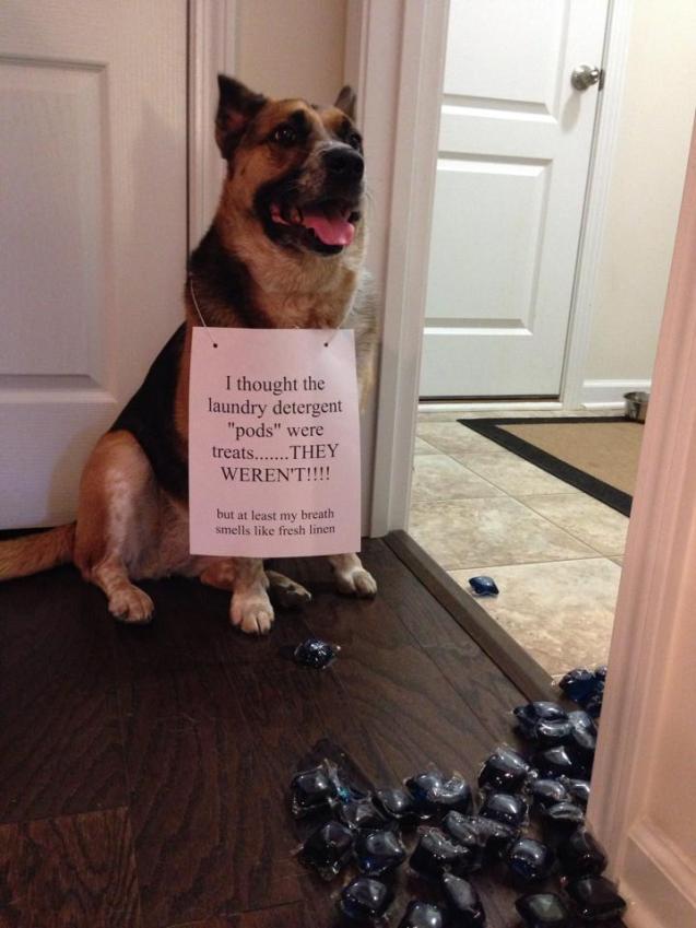 dog-shame2