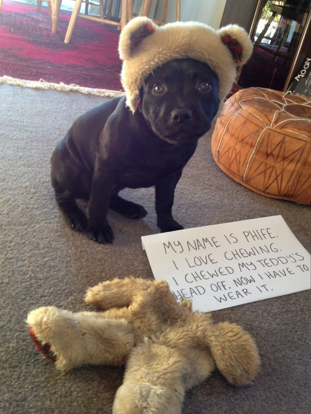 Phife-Dog-Shaming