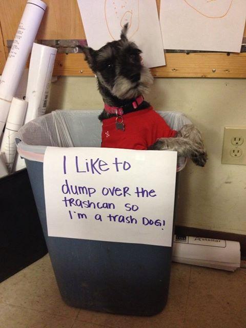 trash-dog