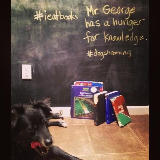 George_dogshaming