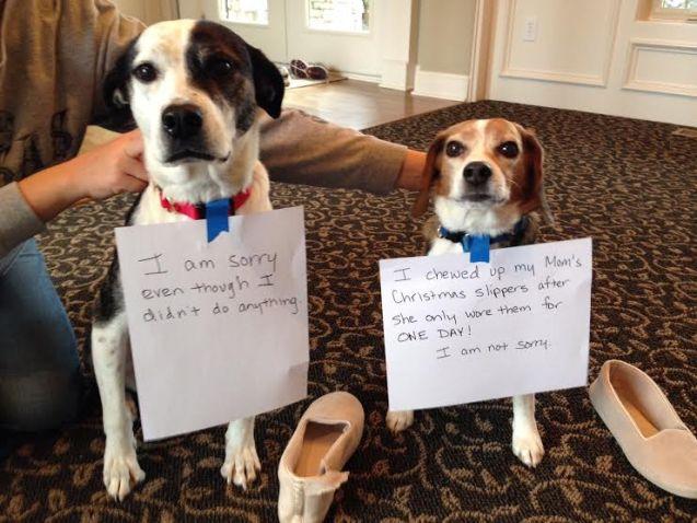 shameddogs