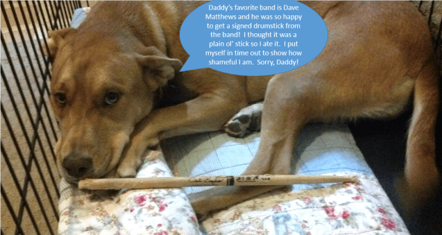dogshaming-Caully