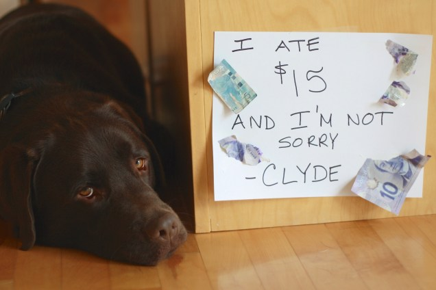 Clyde-Eats-Money-5
