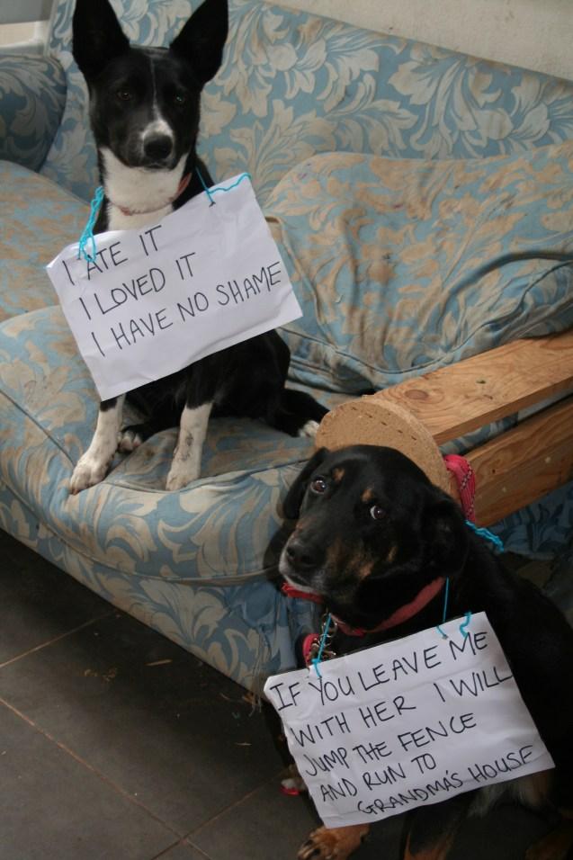 dog-shame-2