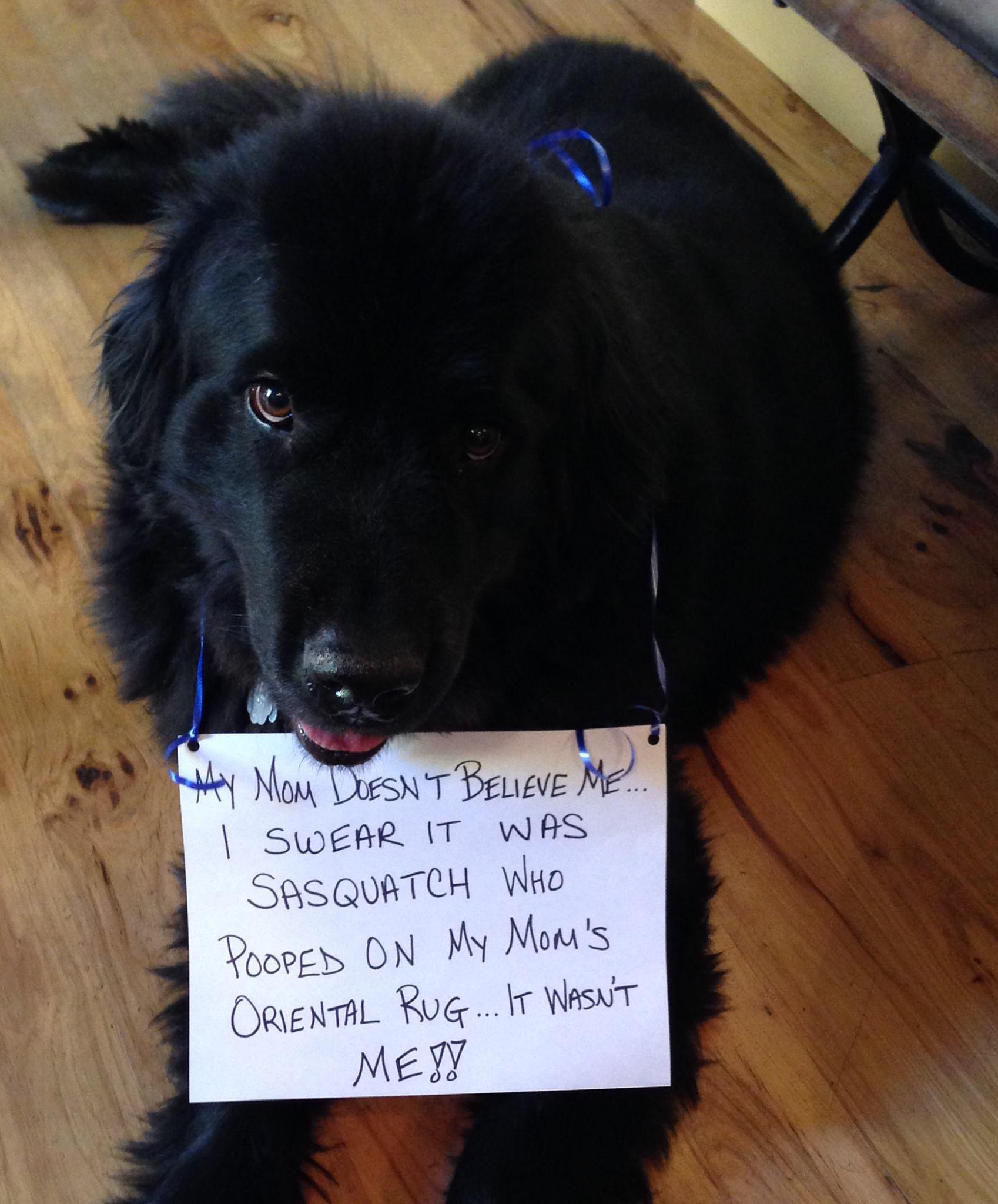 My Dog Peed On My Persian Rug: Sasquatch Did It
