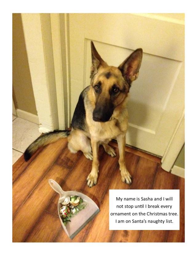 Sasha-Dog-Shaming