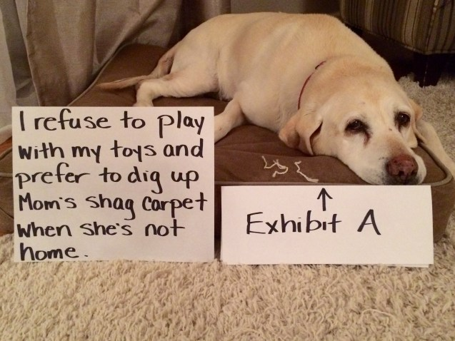 lucy-dog-shaming