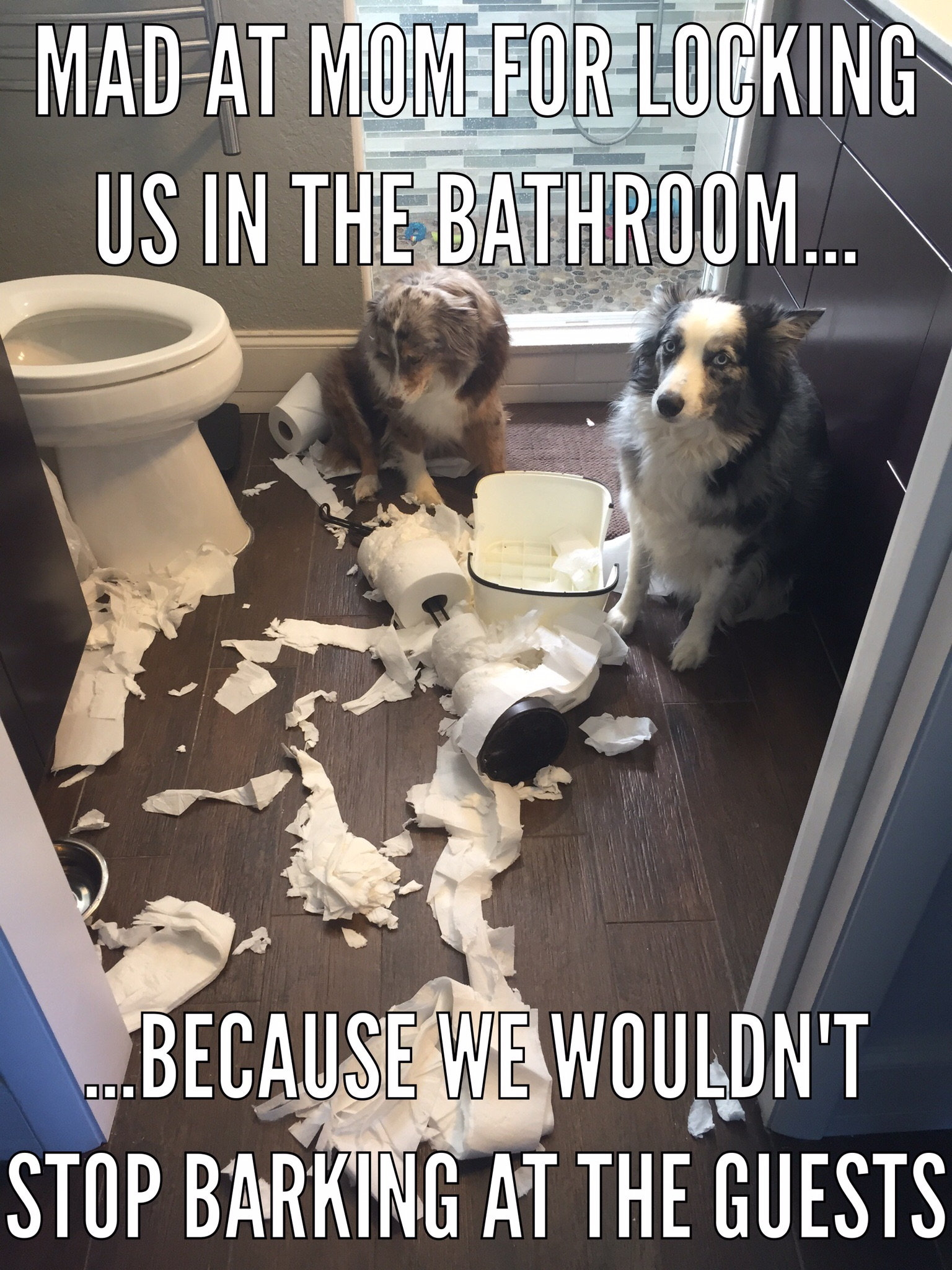 how can i stop my dog jumping on the sofa cisco brothers slipcover toilet paper pups archives page 3 of 13 dogshaming