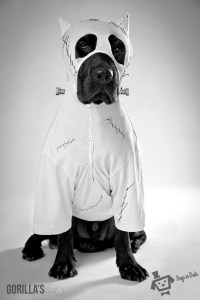 Frankenweenie dog costume  Dogs In Duds