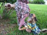 Dog Costume | Dogs In Duds For Dogs Who Like To Dress Up