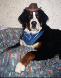 Bernese Mountain Dog | Dogs In Duds For Dogs Who Like To ...