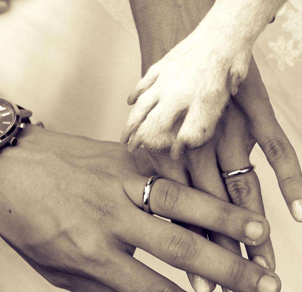chi siamo dog sitter per matrimoni
